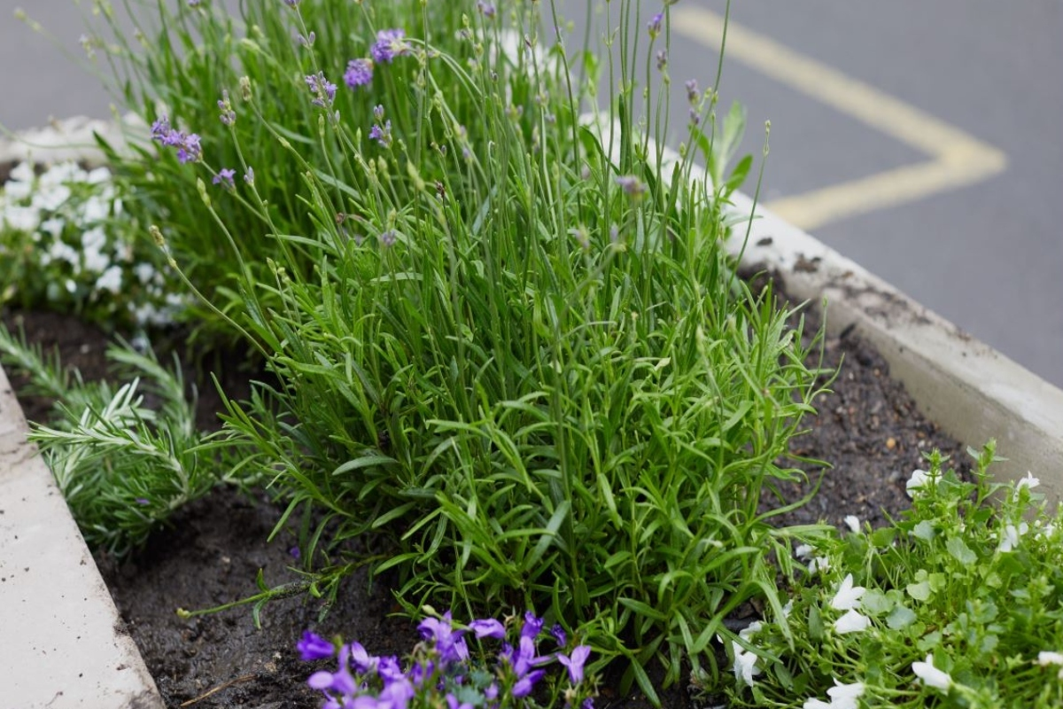 Plants chosen will work hard at providing a touch of beauty and biodiversity